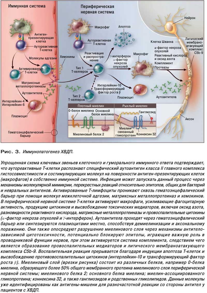 схема лечения кортикостероидами рассеяного склероза